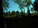 Tapeta Výhled z lesíka