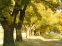 Tapeta Vyjímečné stromořadí