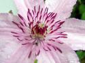 Tapeta Květ