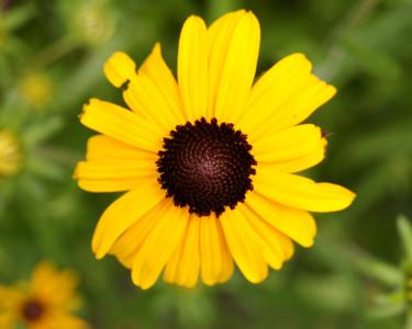 Tapeta: Yellow