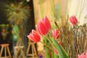 Tapeta Z floristické výstavy13