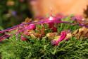 Tapeta Z floristické výstavy 10
