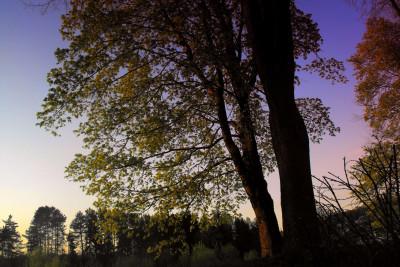 Tapeta: za súmraku