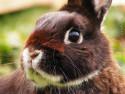 Tapeta Zakrslý králíček