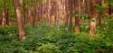 Tapeta zakvitnutý les