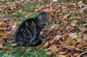 Tapeta Zámecká kočka