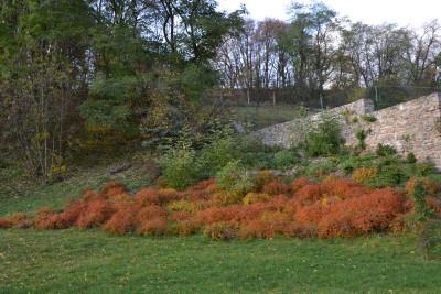 Tapeta: Zámecká zahrada 2