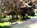 Tapeta Zamilovaná lavička