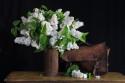 Tapeta zátiší - bílý šeřik