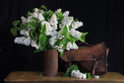 Tapeta: zátiší - bílý šeřik