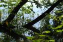 Tapeta Zátiší se stromy a vodou