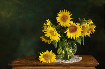 Tapeta: zátiší slunečnice
