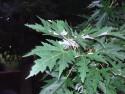 Tapeta Zelené listy na větvi