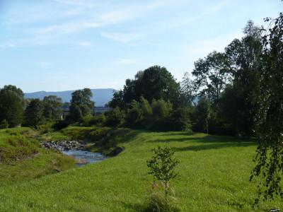 Tapeta: Zelené zátiší