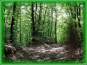 Tapeta Zelený les