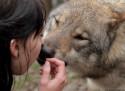 Tapeta Žena s vlkem