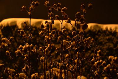 Tapeta: Zima pod lampou 4