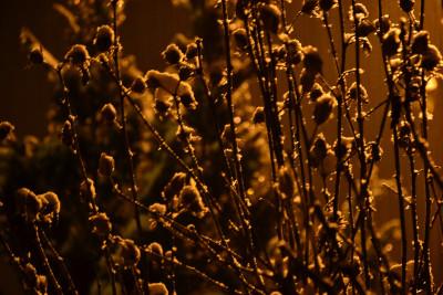 Tapeta: Zima pod lampou 5