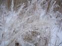 Tapeta Zima-zimička