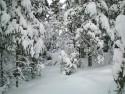 Tapeta Zima Švédska 12