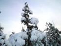 Tapeta Zima Švédska 15