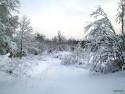 Tapeta Zima Švédska 20