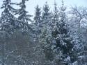 Tapeta Zimní království