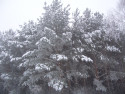 Tapeta Zimní krása