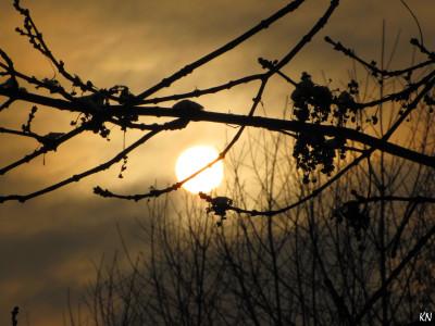 Tapeta: Zimní slunce 3