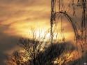 Tapeta Zimní slunce 4
