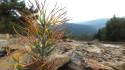 Tapeta život v horách