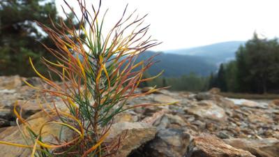 Tapeta: život v horách