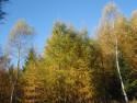Tapeta zlatý podzim