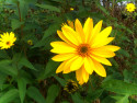 Tapeta žlutá flora