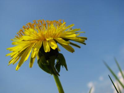 Tapeta: žlutá krása