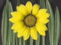 Tapeta Žlutá květina