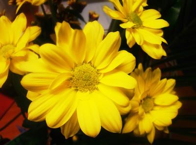 Tapeta: Žlutá kytka