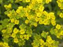 Tapeta Žluté květiny