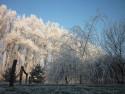 Tapeta Zmrzlé stromy 2