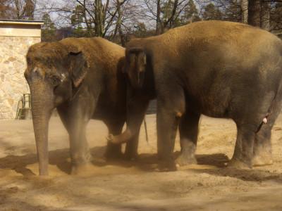 Tapeta: zoo Liberec