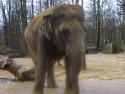 Tapeta zoo Liberec 2