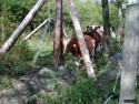 Tapeta Zvířata Švédska 7