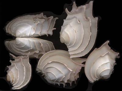 Tapeta: Zvláštní mušle