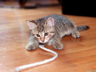 Tapeta: Kočičky 9