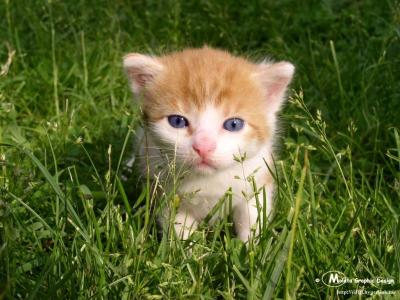Tapeta: Kotě