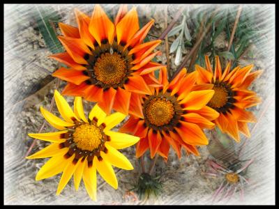 Tapeta: kvety 3