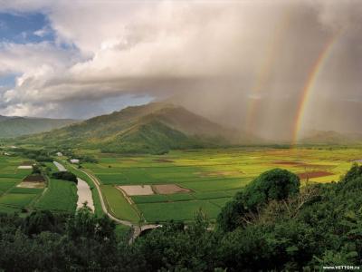 Tapeta: Lesní porost horský