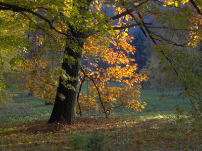 Tapeta: podzim v parku