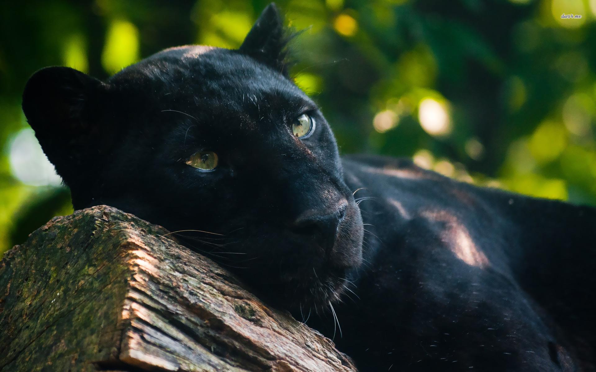 природа животные деревья пантера загрузить